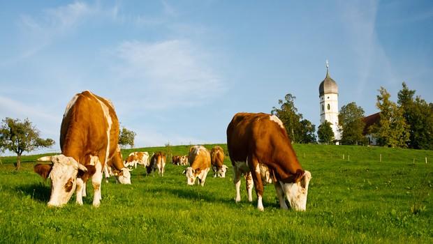 agricoltura 9