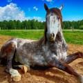 Terapie assistite con gli animali per disabili