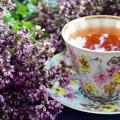 piante per la preparazione di tisane