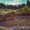 cessione del legno