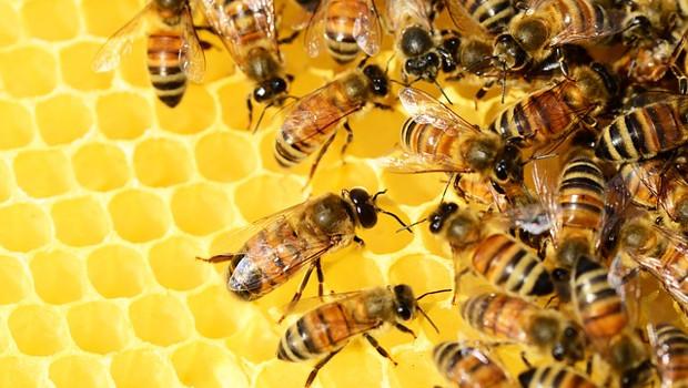 Mangimi per api: sì all'aliquota Iva ridotta
